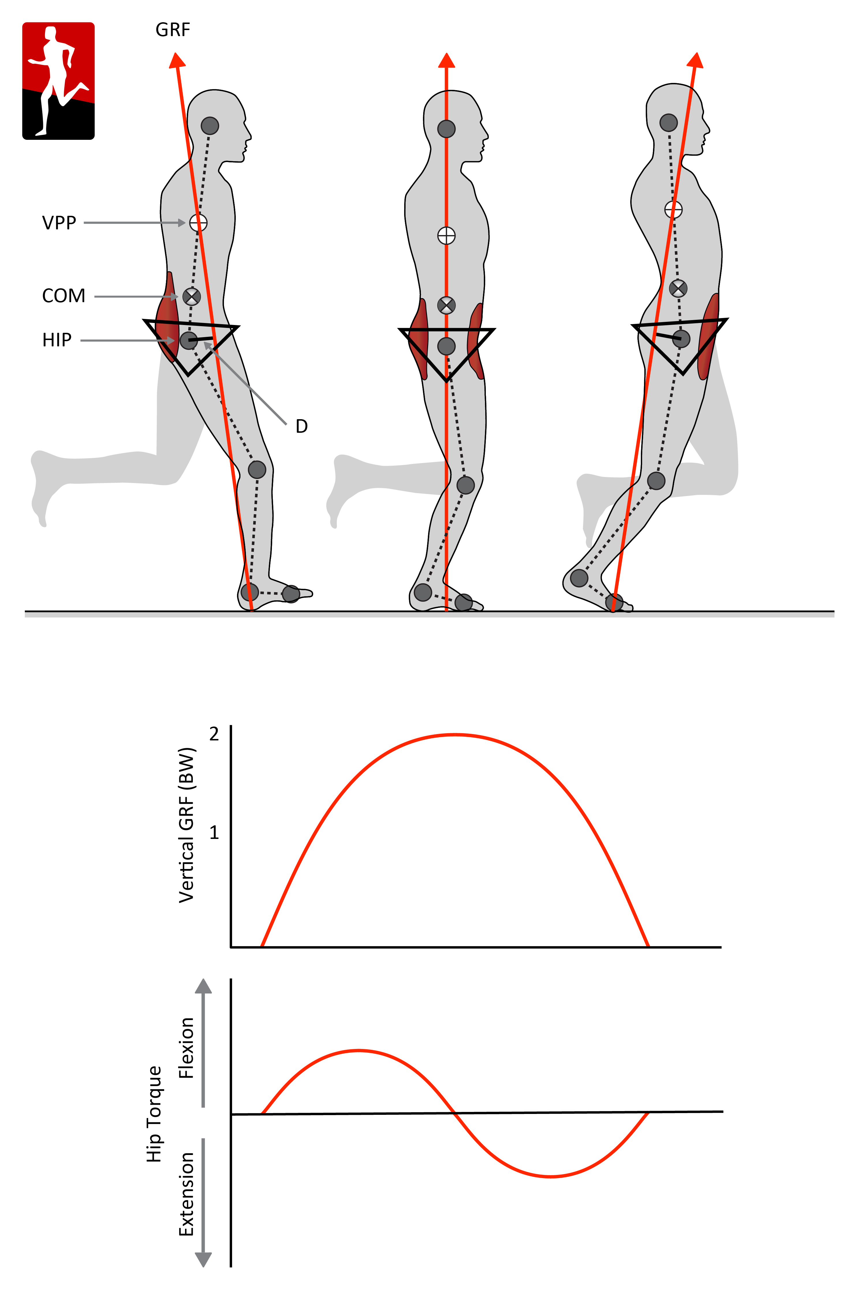 Science of falling VPP_corection hq_muscles