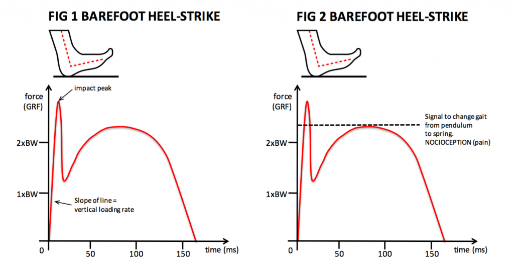 force-time-curve-fig1and2